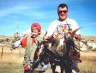 Montana pheasant opener - a mixed bag of pheasants and sharptail grouse.